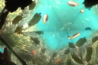 プールの像の万華鏡の写真・画像素材[3235945]