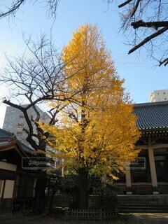 木の隣にあるベンチの写真・画像素材[4067783]