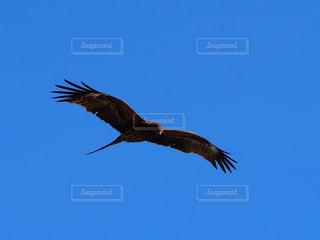 空を飛んでいる鳥の写真・画像素材[3133234]