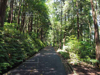 森の中の木道の写真・画像素材[3208624]