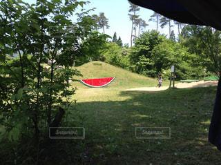 大きなスイカの写真・画像素材[3046332]