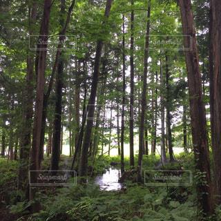 清流と木漏れ日の写真・画像素材[3102936]