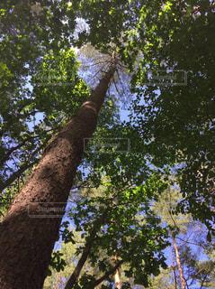 木の写真・画像素材[3105571]