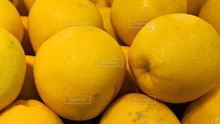 グレープフルーツの写真・画像素材[4002109]