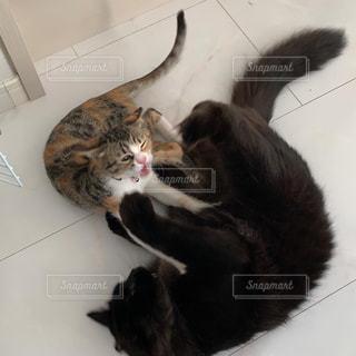 猫のケンカ1の写真・画像素材[3041817]