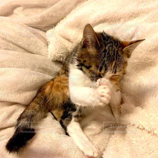お手入れする子猫の写真・画像素材[3050278]