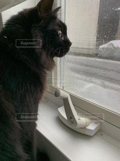 雪見の黒猫の写真・画像素材[3060792]