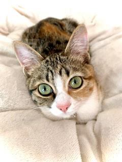 ベッドに横たわる猫のクローズアップの写真・画像素材[3085682]