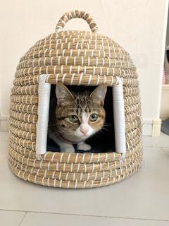 かごの中に座っている猫の写真・画像素材[3085690]