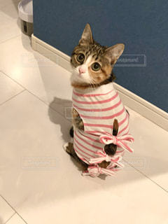 キャットドレス着てますの写真・画像素材[3085689]