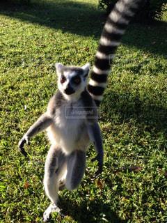 マダガスカルの写真・画像素材[3048396]