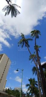 ハワイの空の写真・画像素材[3061669]