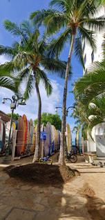ハワイ サーフィンの写真・画像素材[3075357]