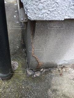 蟻道発見の写真・画像素材[3421186]