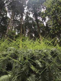 森の中の緑の植物の写真・画像素材[3211807]