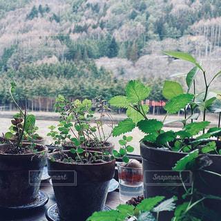 庭の緑の植物の写真・画像素材[3042276]