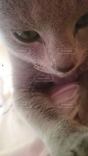 猫の写真・画像素材[130895]