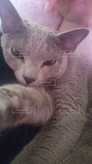 猫の写真・画像素材[130896]