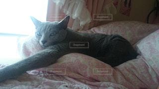 猫の写真・画像素材[130901]