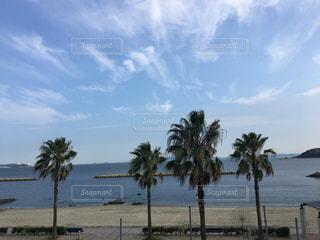 水の体の近くのビーチにヤシの木の写真・画像素材[1229558]