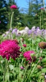 植物の上のピンクの花の写真・画像素材[3064093]