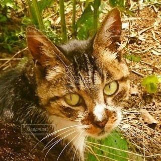 草で覆われた野原の上に座っている猫の写真・画像素材[3555093]