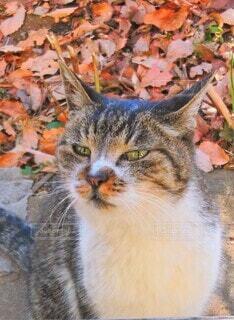家を覗く野良猫の写真・画像素材[4015909]