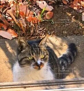 家を覗く野良猫の写真・画像素材[4015906]