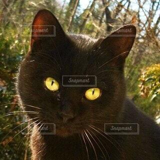 家を覗きこむ野良猫の写真・画像素材[4078544]