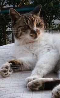 ひなたぼっこしている野良猫の写真・画像素材[4212125]