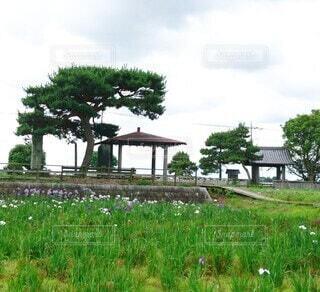 菖蒲城趾あやめ園の風景の写真・画像素材[4516848]
