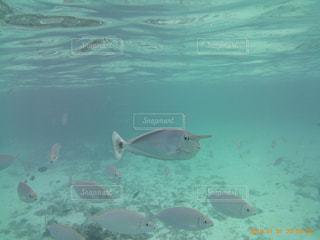 水の中の魚のグループの写真・画像素材[3055578]
