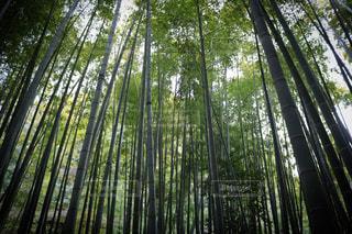 竹林の写真・画像素材[3045663]