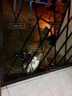 猫の写真・画像素材[148966]