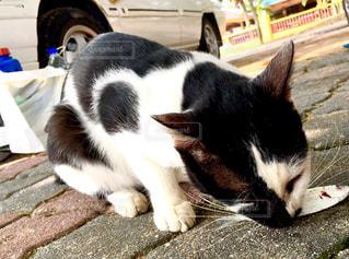 猫の写真・画像素材[164006]