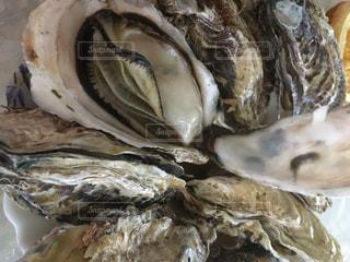 牡蠣の写真・画像素材[3114919]