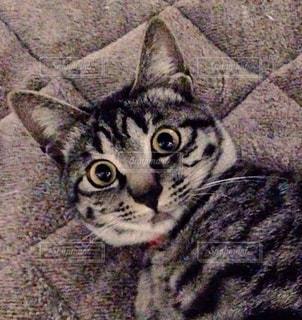 猫 - No.126722