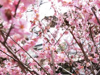 木からぶら下がっている花のクローズアップの写真・画像素材[3053958]