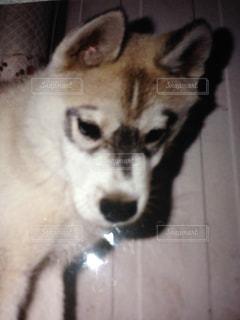 子犬の写真・画像素材[3063909]