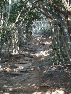 トトロの森の写真・画像素材[3058530]