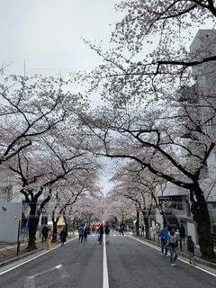 桜並木の人々の写真・画像素材[3058205]
