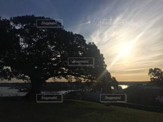 大木と夕日の写真・画像素材[3068066]