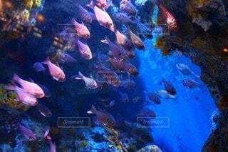 水族館の写真・画像素材[3058382]