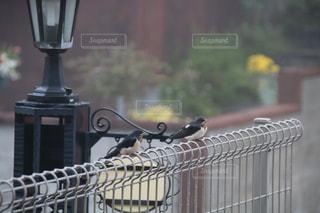 フェンスで休憩の写真・画像素材[3319368]