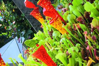 レゴの植物の写真・画像素材[3058970]
