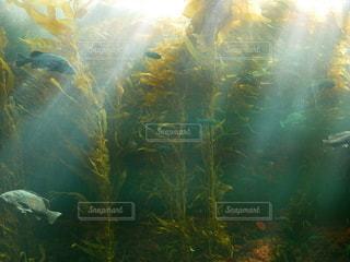 水中の光の写真・画像素材[3059587]