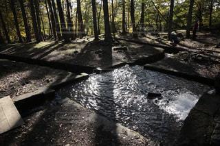 森と水の写真・画像素材[3063432]