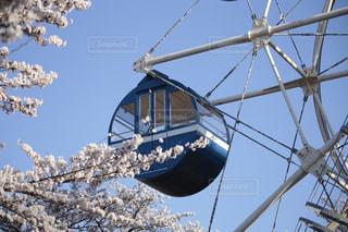 観覧車と桜の写真・画像素材[3063443]