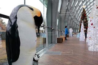ペンギンの写真・画像素材[3063474]