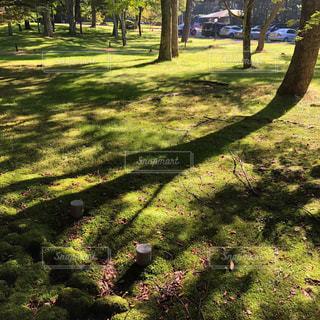 公園の木の写真・画像素材[3063478]